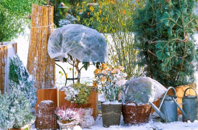Контейнерні рослини краще зібрати разом та влаштувати їм загальне укриття