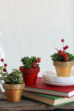 Новорічна кімнатна рослина