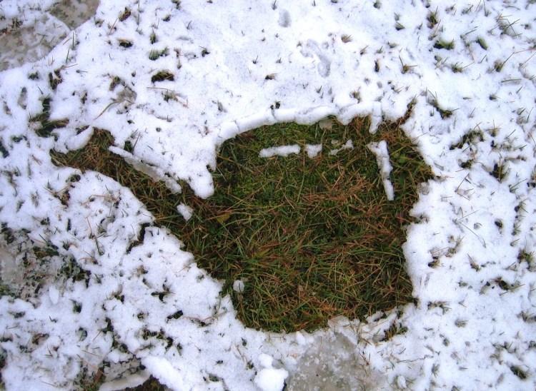 Вологозарядний полив — як і навіщо поливати дерева і кущі на зиму?