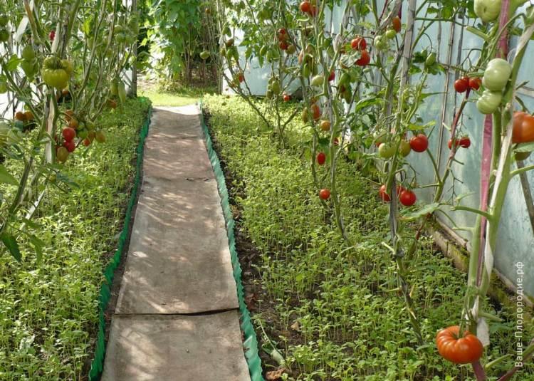 Як органічне землеробство змінило життя пенсіонерів з Литви