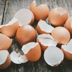 Яєчна шкаралупа — ваш незамінний помічник в саду і на городі