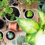 Чого чекають від нас кімнатні рослини навесні? 5 головних правил догляду