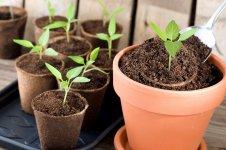 5 ефективних варіантів підживлення розсади