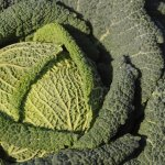 5 незвичайних видів капусти, які варто обов'язково вирощувати