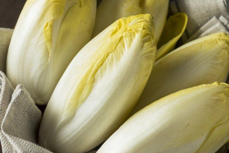Цикорний салат вітлуф