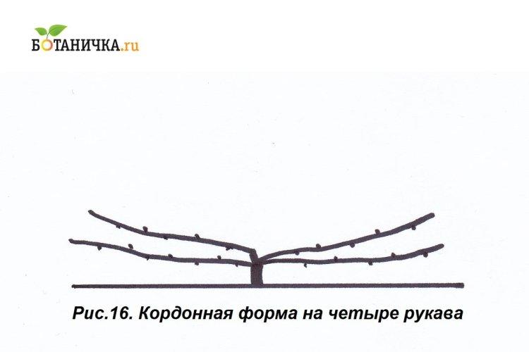 У кордонній формі може бути і не 2, а 4 рукава