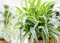 10 кімнатних рослин, які ефективно очищують повітря в приміщенні