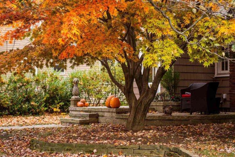 Приймаючи рішення, прибирати опале листя чи ні, варто враховувати і такий фактор, як стиль саду