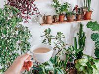 36 фото, які доведуть, що кімнатних рослин багато не буває