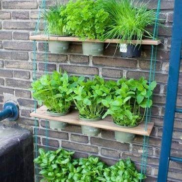 Духмяні трави вдома