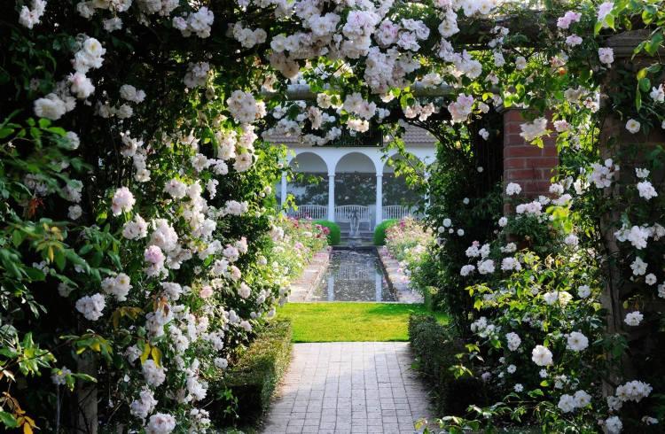 На своїй фермі на околицях Олбрайтона в 300 км від Лондона Девіда Остін створив демонстраційний сад