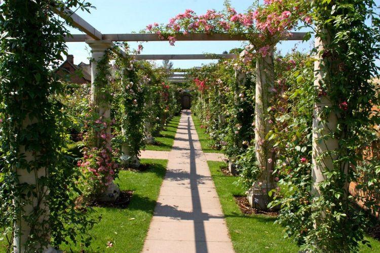 Довгий сад (THE LONG GARDEN) демонстраційного саду Девіда Остіна