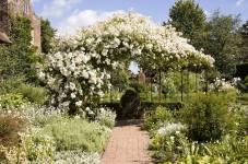 Сад Сісінгхерст і його техніка обрізування та формування троянд
