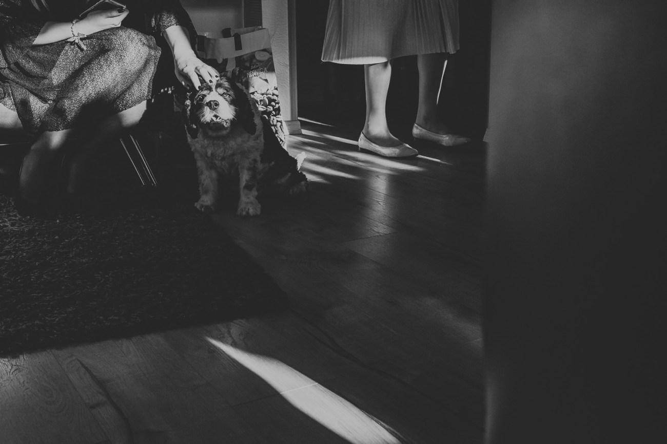 dubrovnik croatia wedding dog