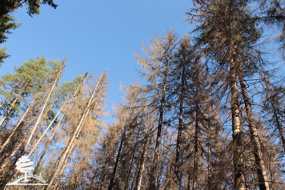 Alacsony az átlagkereset a mezőgazdaság, az erdőgazdálkodás és a halászat területén | Erdő-Mező