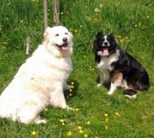 Ferien auf dem Bauernhof, Zeltnerhof: Unsere Hunde