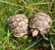 Urlaub mit Kindern in Deutschland, unsere Schildkröten