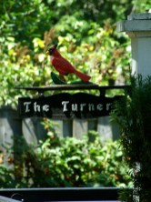 Niagara on the Lake homes_6414128757_l