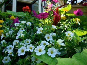 Niagara on the Lake_6414134719_l