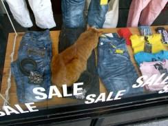 Window cat_6284503498_l