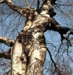 interestingtree