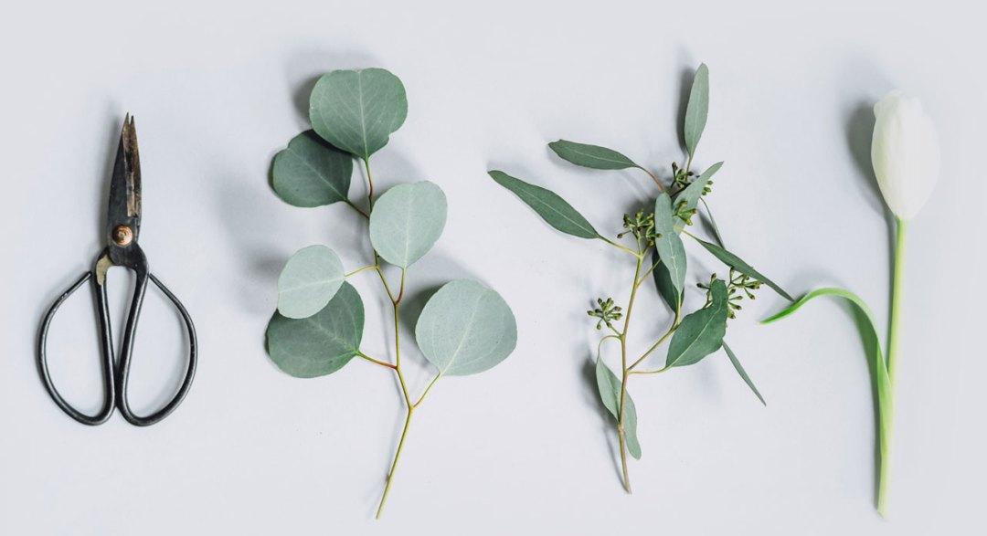 plantes pour le bien être