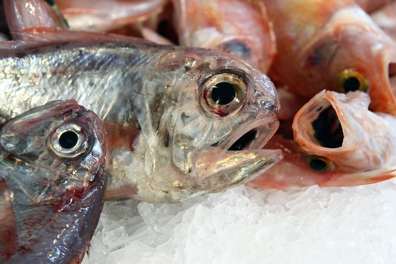 Pesci d'estate: i cinque che si possono mangiare