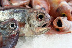 Slow Fish_bocche pesci-L