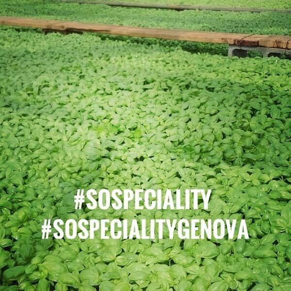 #SoSpeciality basilico