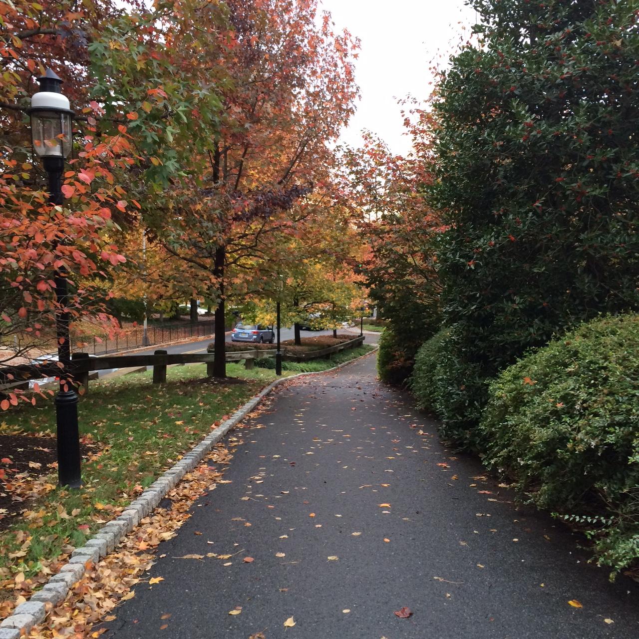 Princeton19