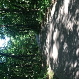 Morton Arboretum-8