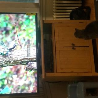 New TV-3