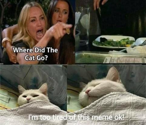 Cat meme-1.jpg