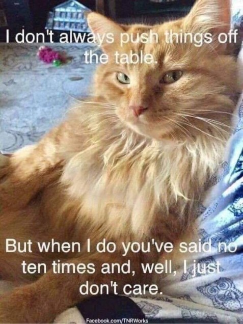 Cat meme-2.jpg
