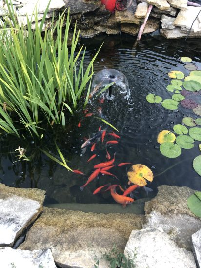 Fish pond-1.jpg