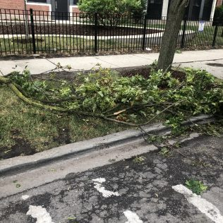 Fallen branches-1