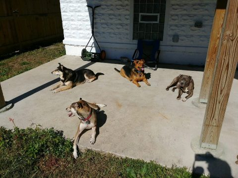 All Four of My Dogs