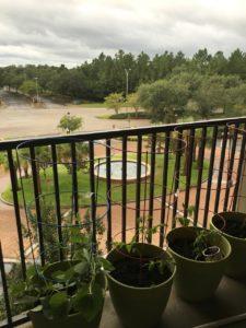 Pot Gardening on Patio