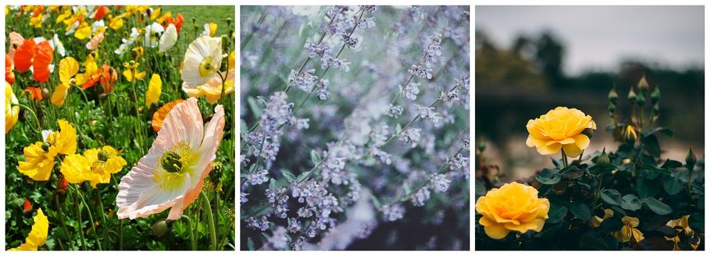 vrt kao katolički kutak za molivu; narančasto, ljubičasto, žuto cvijeće