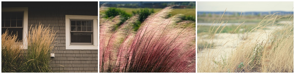 vrt kao katolički kutak za molivu; ukrasna trava