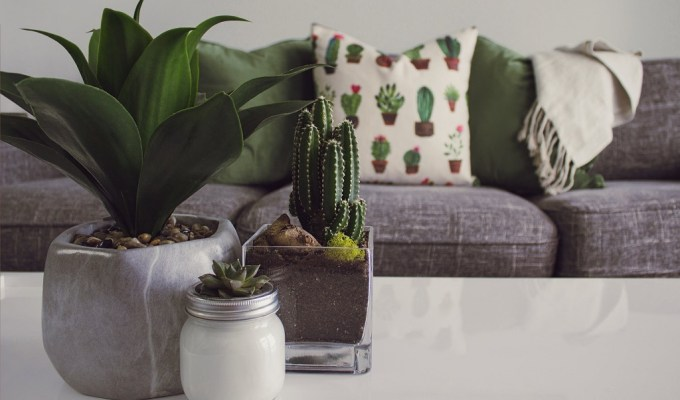održavanje sobnih biljaka