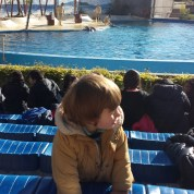 minibreak to Madrid with toddler : dolphins at Zoo