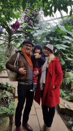 Kew Gardens Orchids festival