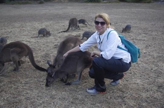 Kangaroo island: pregnancy and volunteering
