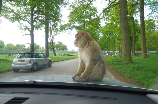 Woburn safari: the wild animals