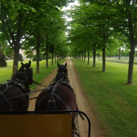 Hampton Court ride