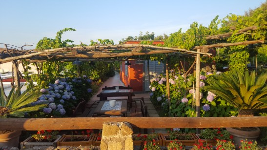 Vineyards at La Vigna