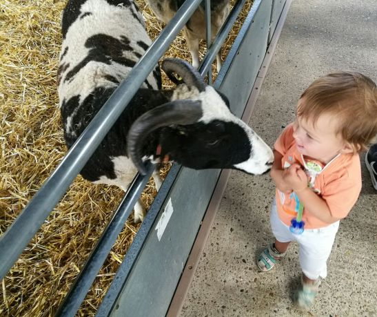 Odds farm dayout with kids: Jacob sheep & baby E