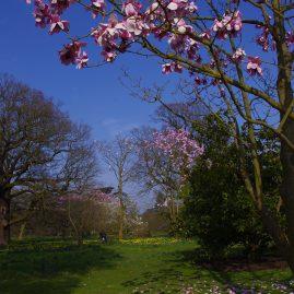 Spring in Kew Gardens
