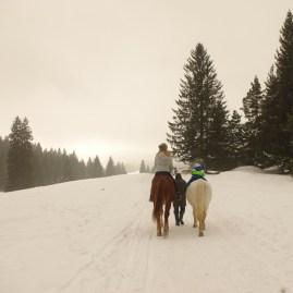 Romanian winter horse riding